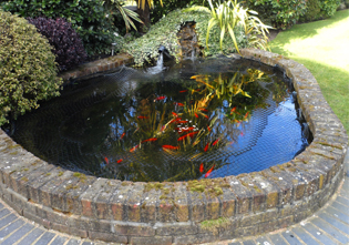 Fish Tank Installation And Pond Installation In