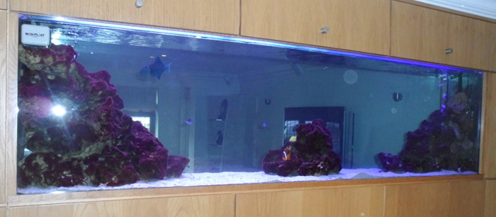 Fish Tank Care : Fish Tank Installations in Hertfordshire Aquatic Care